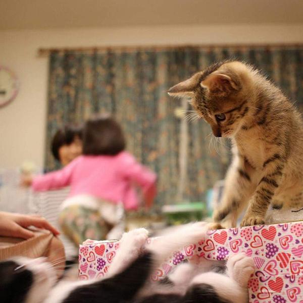 初めてうちにやってきた保護猫ちゃん兄弟