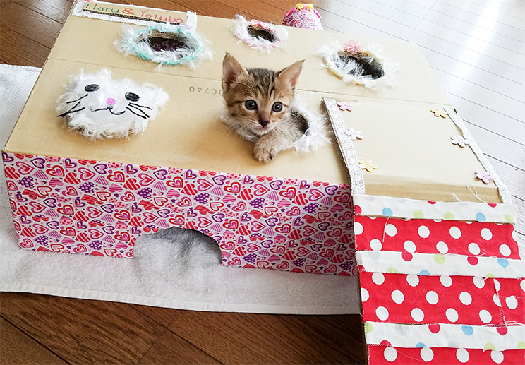 長女がつくった保護猫の兄弟のおもちゃ