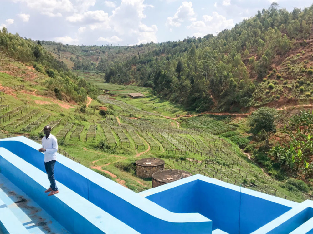 ルワンダのコーヒー農園